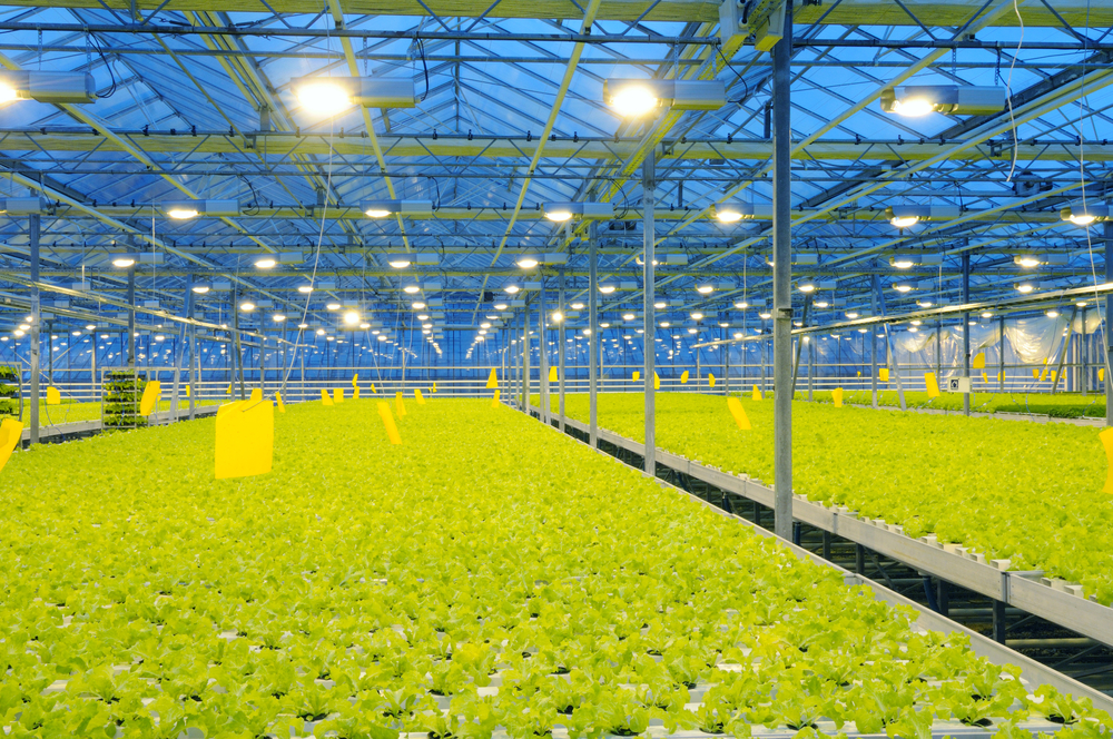 Raise your game not your grow lights adjust a wings high placement of deep dish style reflectors in a commercial greenhouse mozeypictures Image collections